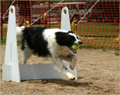 Fred doing agility