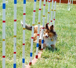 Middletown Dog Training Club Ohio